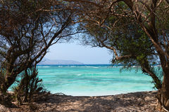 Free Nature Tree Frame To The Sea Royalty Free Stock Photos - 32607408