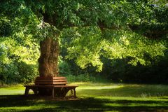 Nature, Tree, Green, Vegetation Royalty Free Stock Images