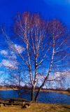 Nature. Tree by the lake Stock Photo
