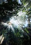 Nature, Tree, Leaf, Vegetation stock photography
