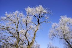 Tree with rime in the cold morning in Winter stock image