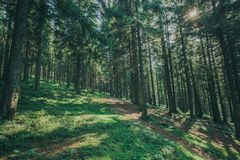 A nature tree . pathway in the forest with sunlight backgrounds. Stock Photo