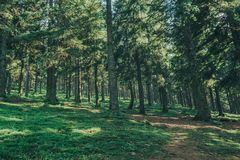 A nature tree . pathway in the forest with sunlight backgrounds. Royalty Free Stock Image