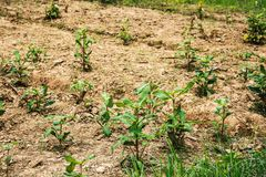 Small tree plant ground nature growing Royalty Free Stock Image