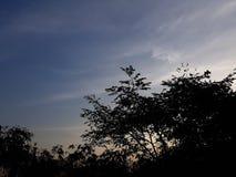 Nature tree sky. Bambo tree clean sky Royalty Free Stock Photo