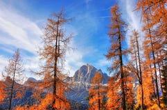Nature, Tree, Sky, Ecosystem Stock Photography