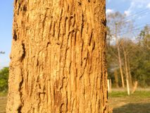 Nature royalty free stock image