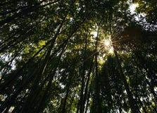 Nature, Tree, Vegetation, Leaf royalty free stock photo