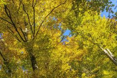 Nature, Tree, Yellow, Leaf stock image