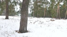 Nature trees forest christmas tree, snow frost cold landscape the winter Stock Photography