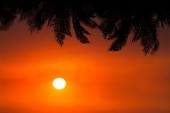 Nature Trees Sunrise Sunset Background Stock Photo