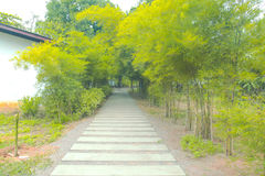 Nature trees tunnel with pathway; green garden landscape background Royalty Free Stock Images