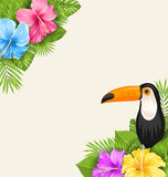 Nature Tropical Background with Toucan, Hibiscus Flowers and Palm Leaves Royalty Free Stock Images