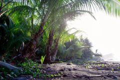 Nature tropical landscape palm flora royalty free stock photography
