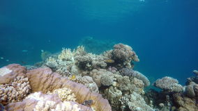 Nature, Tropical, Under water. stock footage