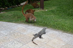 Nature, tropics, Caribbean, Yucatan, Mexico, resor Stock Photos