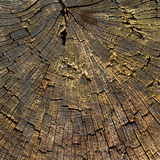 Nature. Trunk of old tree as background texture Stock Images