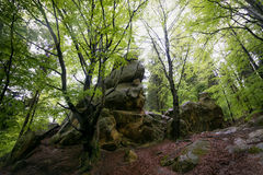 Nature in Tustan. Lviv region. May month Royalty Free Stock Photo