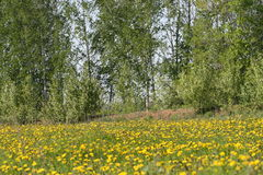 Nature. Ufa. Ufa area. village of Shamonino. Month Mai. 2014 Royalty Free Stock Photo