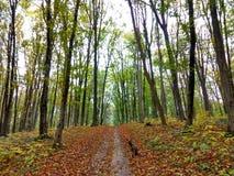 Nature in Ukraine Stock Photography