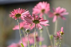 Nature un jour ensoleillé Plantes, fleurs et atmosphère ensoleillée photographie stock