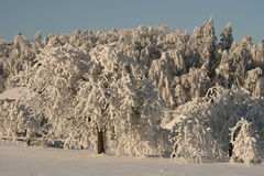 Nature under the snow. Snow cover the village, frozen trees and bushes Stock Image