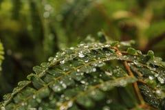 nature Une goutte de l'eau sur une feuille photos libres de droits