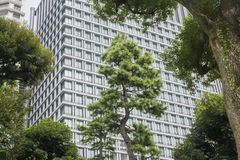 Nature or urban background with view of Hibiya park in Tokyo, Japan. With trees and tall buildings of Marunouchi district illustrating modern urban ecology stock image