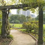 Nature or urban background with view of Hibiya park in Tokyo. Japan, with trees and tall buildings of Marunouchi district illustrating modern urban ecology stock image