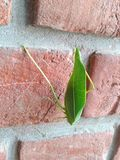 Nature with urban. Insect on bricks Stock Images