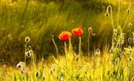 Nature Vérone Image libre de droits