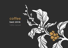 Free Nature Vector Banner Of Coffee Branch, Leaves, Bean. Royalty Free Stock Images - 122295569