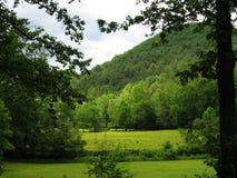Nature, Vegetation, Ecosystem, Green stock images