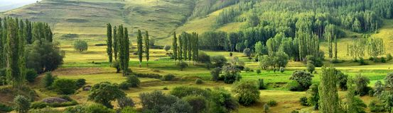 Nature, Vegetation, Ecosystem, Nature Reserve royalty free stock photo