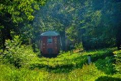 Nature, Vegetation, Green, Ecosystem royalty free stock photo