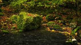 Nature, Vegetation, Leaf, Autumn stock photo