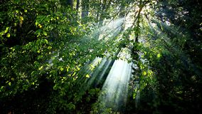 Nature, Vegetation, Leaf, Nature Reserve royalty free stock images
