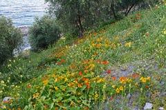 Nature. The vegetation on the ligurian coast Stock Photo