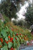 Nature. The vegetation on the ligurian coast Stock Image