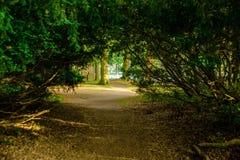 Nature, Vegetation, Nature Reserve, Path stock photography