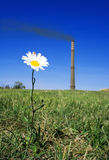 Nature verses industry. Conceptual view a daisy flower with a smoking industrial chimney in the background, environmental concept Royalty Free Stock Photos