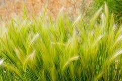 Nature verte Photo stock