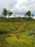Nature verte dans les montagnes de Dalarna du nord, Suède photographie stock libre de droits