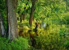 Nature verte de forêt photographie stock libre de droits