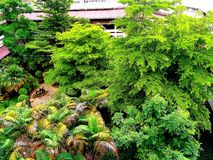 Nature verte de ville d'arbre gentille Image stock