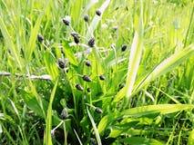 Nature verte et belle planète Photographie stock libre de droits