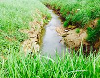 Nature verte et petit lac en Belgique sur la fin du printemps Image libre de droits