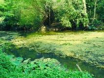 Nature verte paisible avec l'étang tranquille, symbole de paix et harmonie photos stock