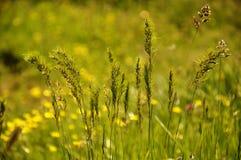 Nature verte pure Photo stock