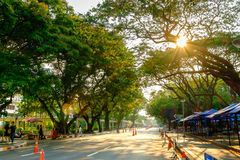Nature verte sur l'université de Chulalongkorn avec le coucher du soleil Photos stock